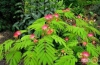 Ornamental Shrubs / Trees